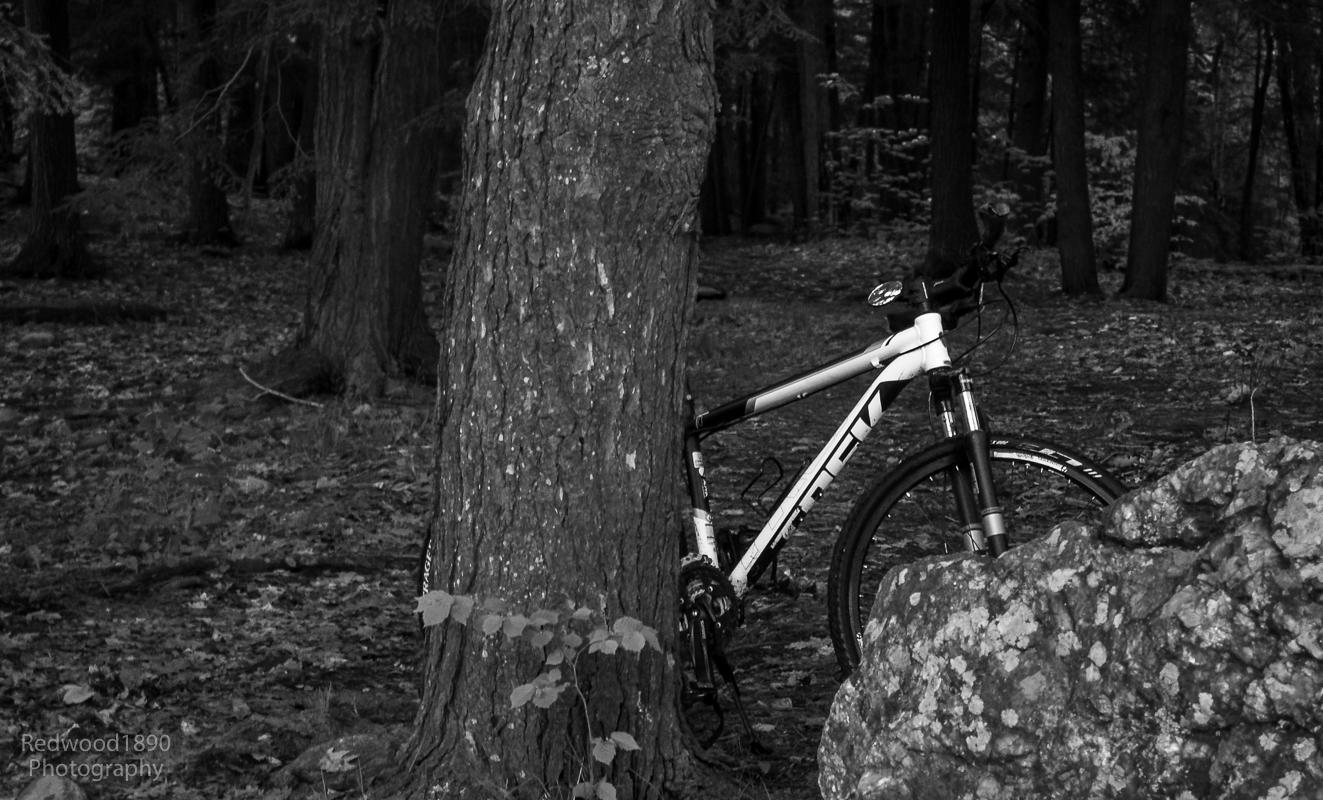 Redwood1890-20150526-_PL50220_DxO